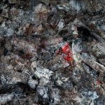 30 Uses for Wood Ash