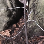 How to Make a Basic SNARE Trap with Paracord or Wire – Catch Your Own Survival Food