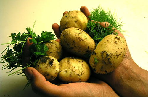 potatoes_in_hand1