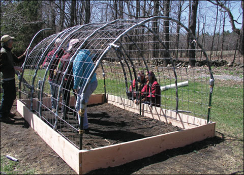 Cattle-panel-hoop-house