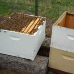 Beekeeping for Beginners -Hive Set Up