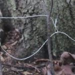 How to Make a Basic SNARE Trap with Paracord or Wire