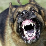 How to Fend off a Dog Attack