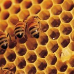 Safe and Natural Ways to Remove Bee Hives
