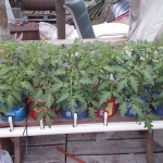 How To Build a Hydroponic System from Coffee Containers