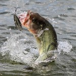 Important Springtime Fishing Tips to Consider