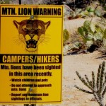Defending Against a Mountain Lion Attack