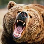 Why You Never Want to Try And Outrun a Charging Bear