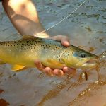 Basic Trout Fishing Tips and Tactics