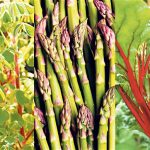 Perennial Vegetables that Grow Year After Year