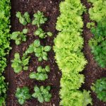 Why Everyone Should Plant a Survival Garden