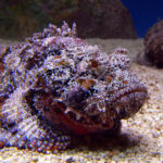 Top Poisonous and Venomous Fish to Avoid