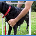 How to Make a Simple and Effective Dog Washer