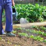 Organizing Your Garden:  What NOT to Plant Together