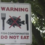 Toxins in Fish and How to Minimize Exposure