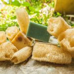 How to Grow Your Own Loofah Sponges