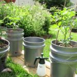 How to Build a Self-Watering Tomato Planting System