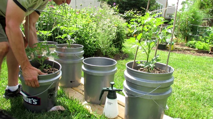 Tomatoes Are One Of Those Plants That Can Be Grown Almost Anywhere And  Under Different Conditions, Including Planters. You Can Take This To A  Whole New ...