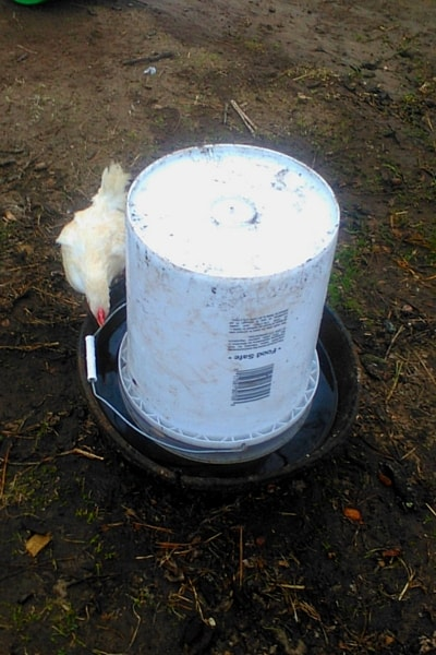 DIY-Automatic-chicken-waterer-1-min