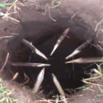 Apache Foot Trap (A Survival Trap)