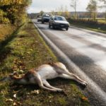 Choosing Road Kill for Food